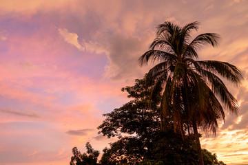 Türaufkleber Rosa Lovey palmera con atardecer y cielo de colores rosa, lila y morado