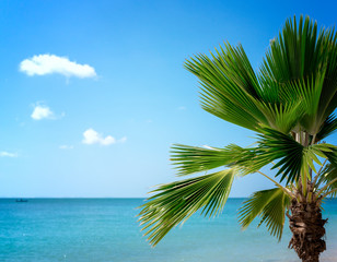 Fototapete - Exotic beautiful beach with palm trees and blue ocean in tropical island. Summer vacation and tropical beach concept