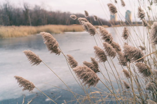 Beautiful winter landscape background of pampas grass moving in the wind calm nature backdrop of frozen lake.