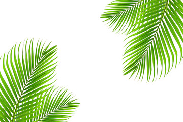Foto auf Leinwand Palms Concept texture leaves abstract green nature background tropical leaves coconut isolated on white background