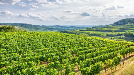 Fotorolgordijn Wijngaard aerial view vineyard scenery at Kaiserstuhl Germany