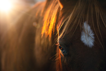 Close-up of a horse in the morning sun