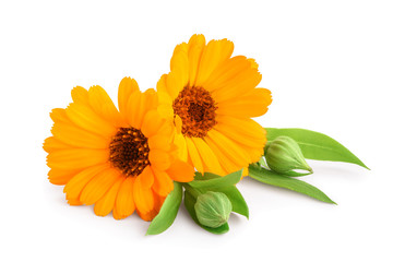 Photo sur cadre textile Fleuriste Calendula. Marigold flower with leaves isolated on white background