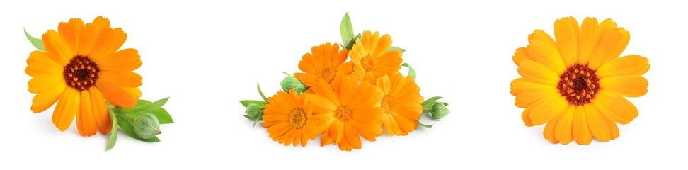 Calendula. Marigold flower with leaves isolated on white background. Set or collection