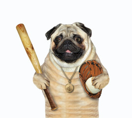 The dog baseball player with a gold medal holds a bat, a ball and a glove. White background. Isolated.