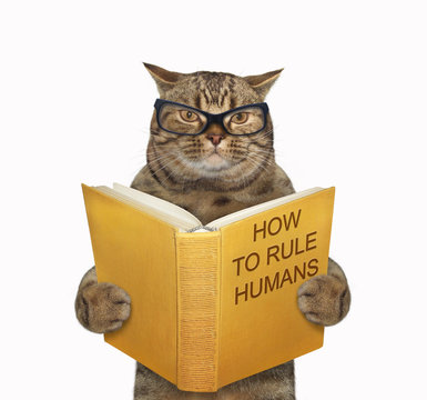The beige cat in glasses is reading a book called how to rule humans. White background. Isolated.