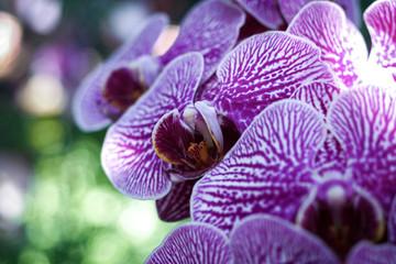 Tuinposter Orchidee OLYMPUS DIGITAL CAMERA