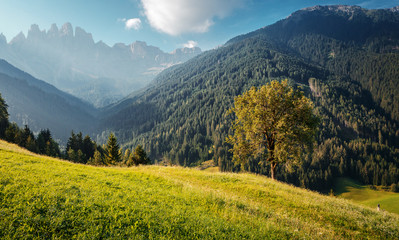 Fotomurales - Awesome alpine highlands in sunny day. Alps mountain meadow tranquil summer view. Landscape with Fresh grass, perfect sky and rock mountains Dolomites under bright sunlight. Amazing Nature Scenery.