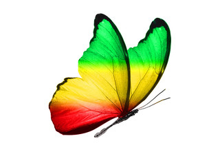 Photo sur Aluminium Papillons dans Grunge butterfly isolated on a white background. with wings of yellow, green, red. Rasta color.