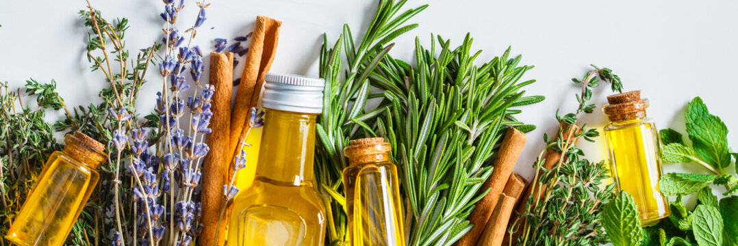 Banner of Essential oils in glass bottles. Thyme, mint, rosemary and lavender essential oils, top view.