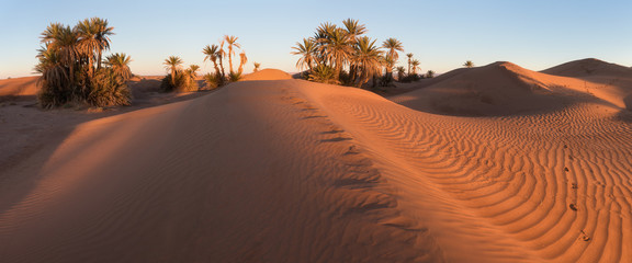 Colorful sunset in the desert above the oasis with palm trees and sand dunes. Sahara desert, Morcco, Africa