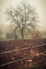 Photo sur Plexiglas Gris paysage hivernal dans le brouillard