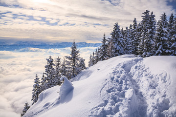 Pendling point on the Schneeberg mountain in Alps near Thiersee at Kufstein in Austria, Europe.