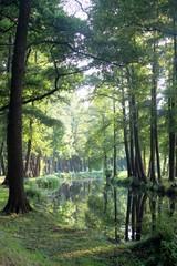 Naturerlebnis im Spreewald: Wasserwege in ruhiger Natur, Brandenburg