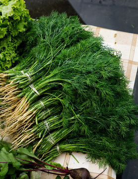 Bunches of dill on table