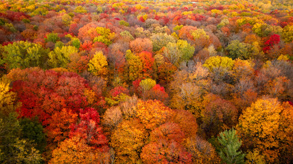 Aerial view of a forest with the colorful autumn leaves