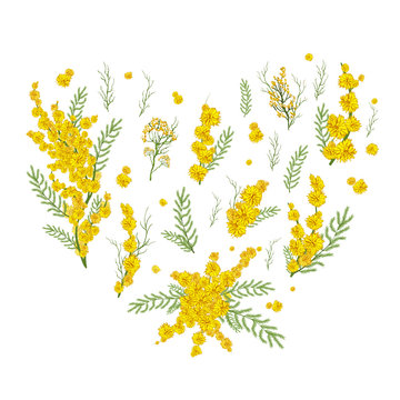 hand drawn set with Mimosa flowers, grass realistic Doodle isolated on white background. Botanical elements in the form of a heart for decoration, decor, presentation, Wallpaper.