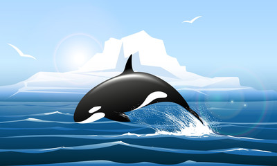 Orca or Killer Whale Jumps out of the Water