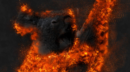 Photo sur Toile Koala koala fire from australia forest