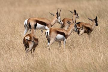 Papiers peints Antilope Antilope