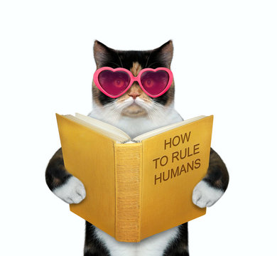 The multicolor cat in pink heart shaped glasses is reading a book called how to rule humans. White background. Isolated.