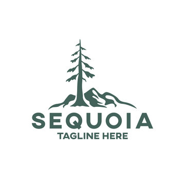 Modern tree sequoia logo. Vector illustration.