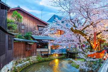 Kyoto, Japan at the Shirakawa River in the Gion District during the spring cherry blosson season.