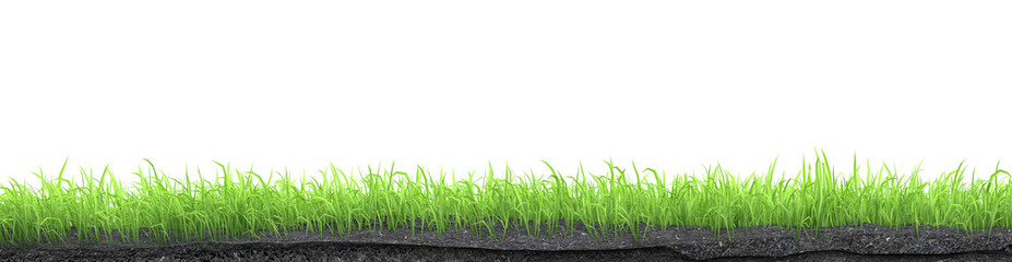 Wall Mural - green grass turf isolated on white background 3D illustration