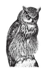 Canvas Prints Owls cartoon Eurasian Eagle Owl (Bubo maximus) / vintage illustration from Brockhaus Konversations Lexikon 1908