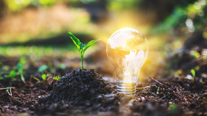 Closeup image of a small tree and a light bulb glowing on pile of soil