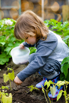cute little girl planting seeds in vegetable patch