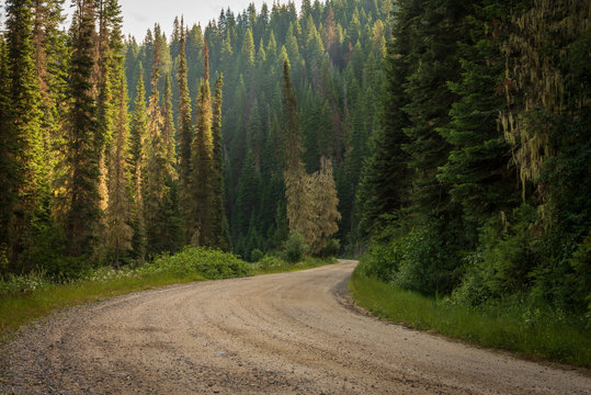 Remote, unpaved, winding country road in the dense forest.