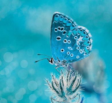 mariposa azul al amenecer en el campo