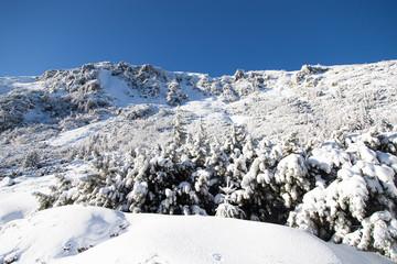 Fototapeta góry zimą wraz z obśnieżonymi choinkami obraz