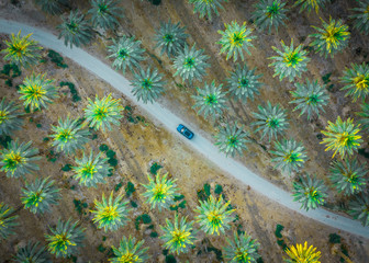 Car is on the road between green palm trees from above