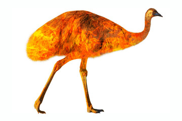 Wall Mural - Composition about emu wildlife in the Australian bushfires in 2020. Emu with fire isolated on white background. Dromaius novaehollandiae species.