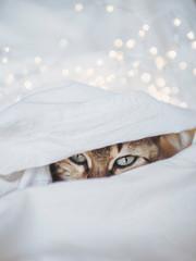 Portrait of cat hiding in bedsheet