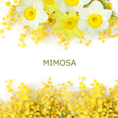 Stores à enrouleur Narcisse Mimosa and narcissus flowers branch isolated on white background