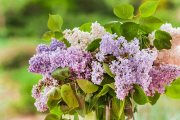 Foto auf Leinwand Flieder lilac flowers in the vase