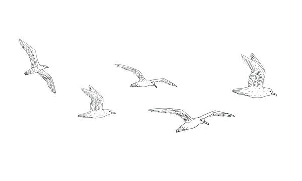 Vector hand drawn doodle sketch flock of seagulls flying isolated on white background