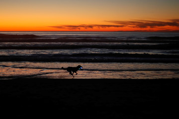 A dog runs along the beach after sun set carrying a glowing ball in his mouth in Cardiff, California