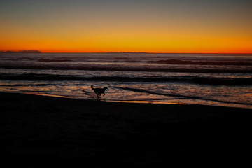 A dog runs along the beach after sunset carrying a glowing ball in his mouth in Cardiff