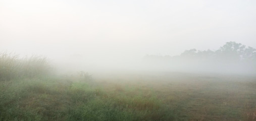 Spoed Foto op Canvas Khaki Morning mist in the meadow