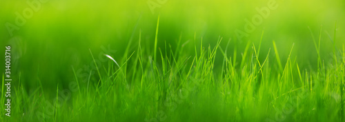 Wall mural Fresh green grass background with sunlight in summer