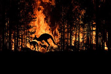 Foto op Aluminium Kangoeroe Bushfire IN Australia Forest Many Kangaroos And Other Animals Running Escaping To Save Their Lives, Evacuation destroyed silhouette.