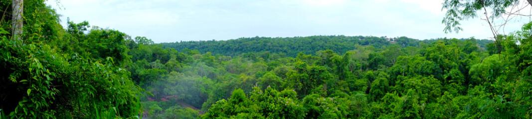 Foto auf Acrylglas Grun Forest view in Puerto Iguacu in Argentina