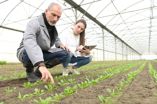 Apprentice in greenhouse learning about organic agriculture