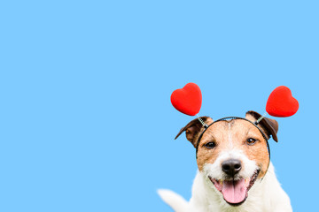 Romantic card with lovely pet dog against solid color backdrop