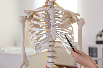 Orthopedist pointing on human skeleton model in clinic, closeup