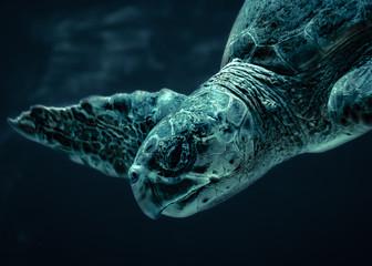 A dark moody photo of a sea turtle underwater